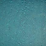 冬に結露が出る窓を予防する方法